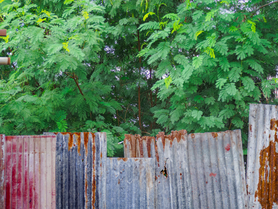 Beauty In Nature Boundary Day Fence Green Green Color Growth In Bloom Leaf Lush Foliage Multi Colored Nature No People Outdoors Plant Protection Red Safety Springtime Surrounding Surrounding Wall Tranquility Tree Wood - Material Wooden