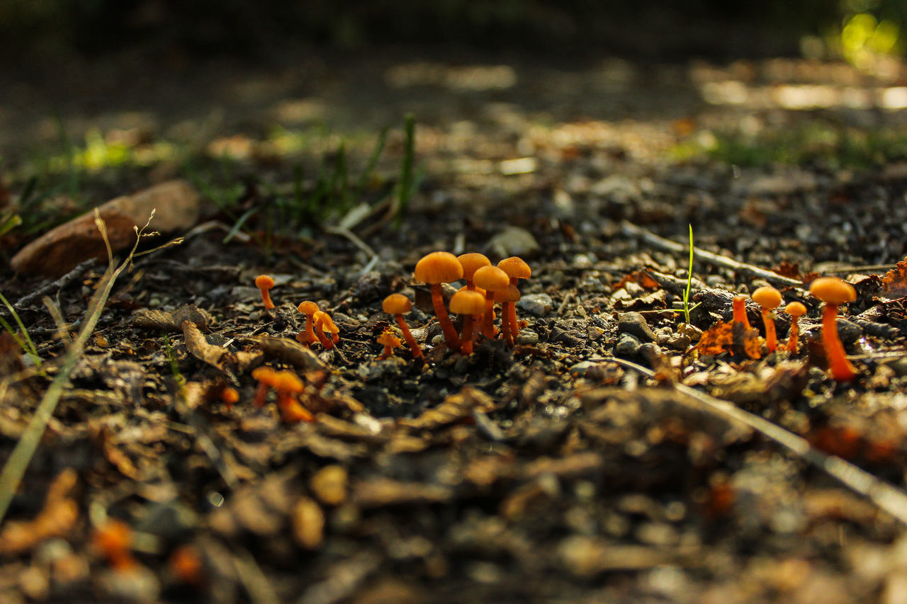 Auntumn Auntumn Colors Beauty In Nature Canon Canonphotography Close-up Day Diversity Fly Agaric Food Food And Drink Freshness Fungus Growth Mushroom Nature No People Outdoors Selective Focus Toadstool