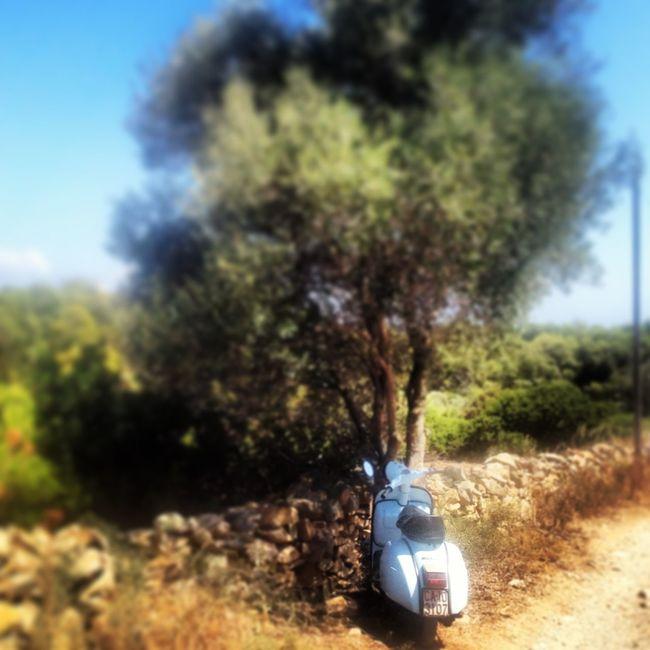 vespe truccate, anni 60 Sardegna Vespa