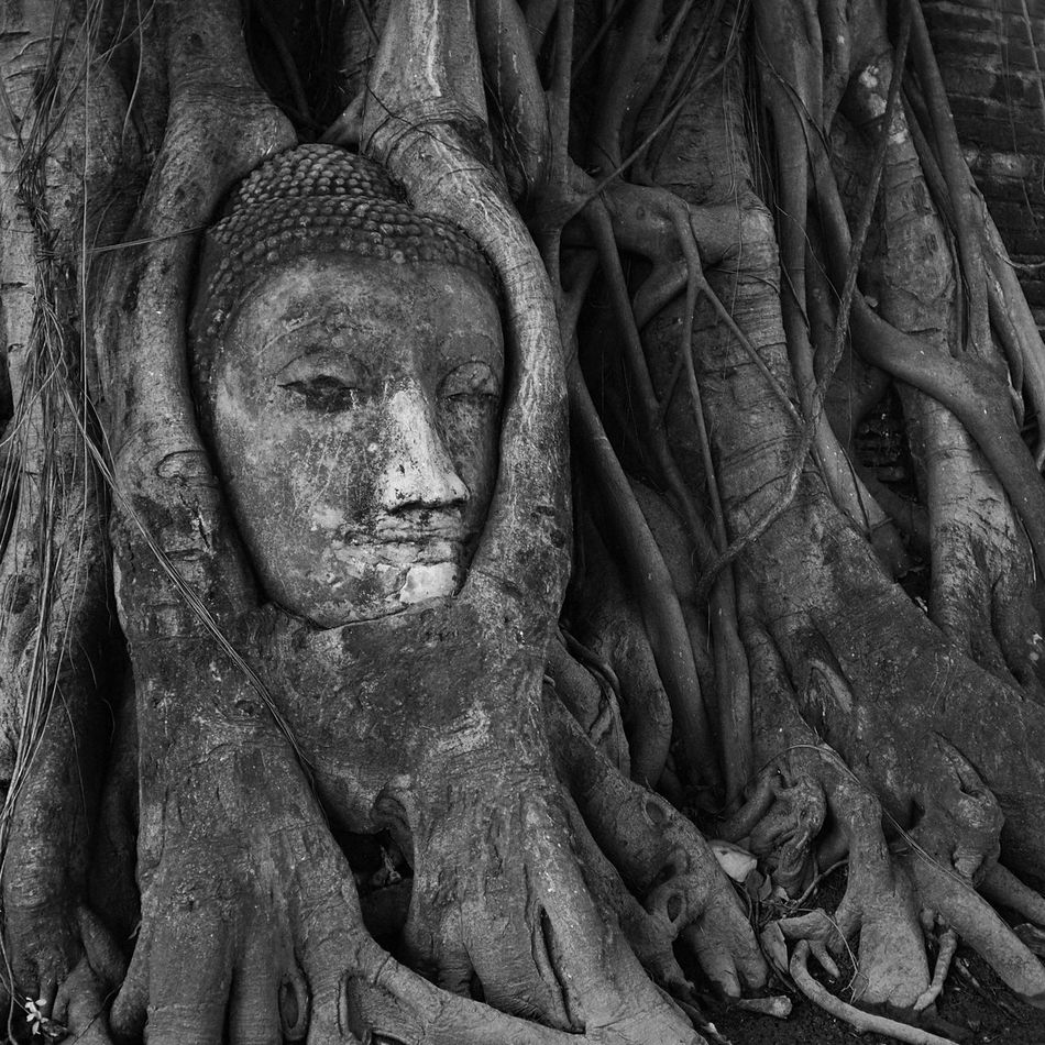 ASIA Ayutthaya Bizarre Black And White Bodhi Tree Buddha Buddhism Decapitated Grainy HEAD Historical Park Place Of Worship Roots Southeast Asia Spotted In Thailand Statue Strangled Strangler Fig Thailand Travel Tree Wat Mahathat