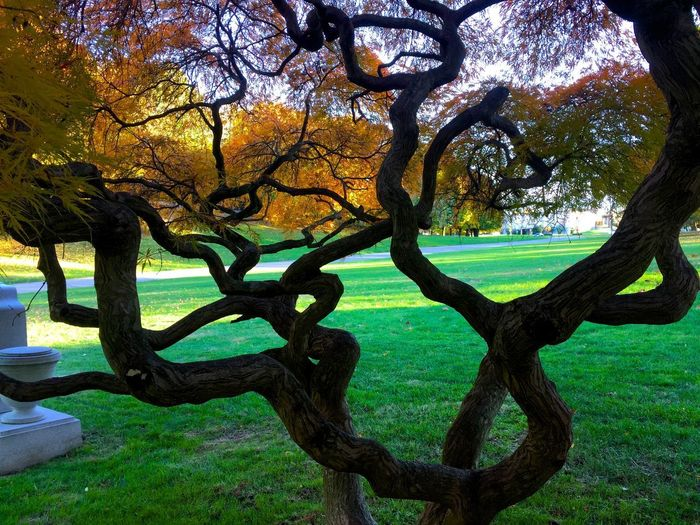 Beauty In Nature Branch No People Outdoors Park - Man Made Space Scenics Tranquility Tree Tree Trunk