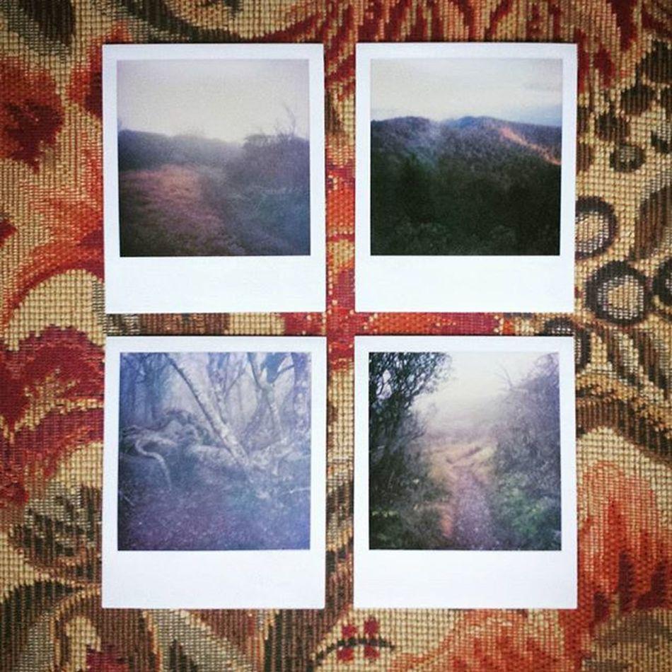 Polaroids of Craggy Gardens on the Blue Ridge Parkway from 2005. ____________________________________________________________________________________________________________________________________________________ BlueRidge Blueridgeparkway Craggygardens Northcarolina NC Hiking Polaroid Polaroids Filmisnotdead Nature_shooters Naturallightphotography Naturelovers Natureaddicts Landscapelovers Outdoorphotography Naturephotography Landscapephotography Allnatureshots Fotoguerrilla Photooftheday Photowork Shootermag Photozine Outdoors