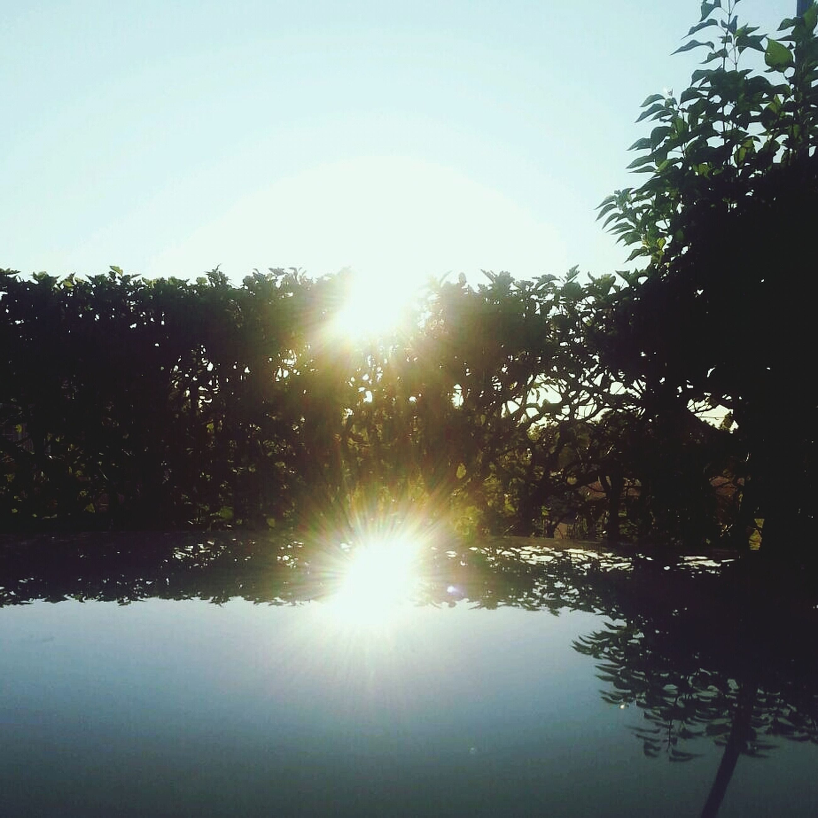 sun, sunbeam, sunlight, tree, lens flare, tranquility, clear sky, tranquil scene, beauty in nature, scenics, nature, reflection, bright, water, sunny, growth, sky, idyllic, shiny, lake