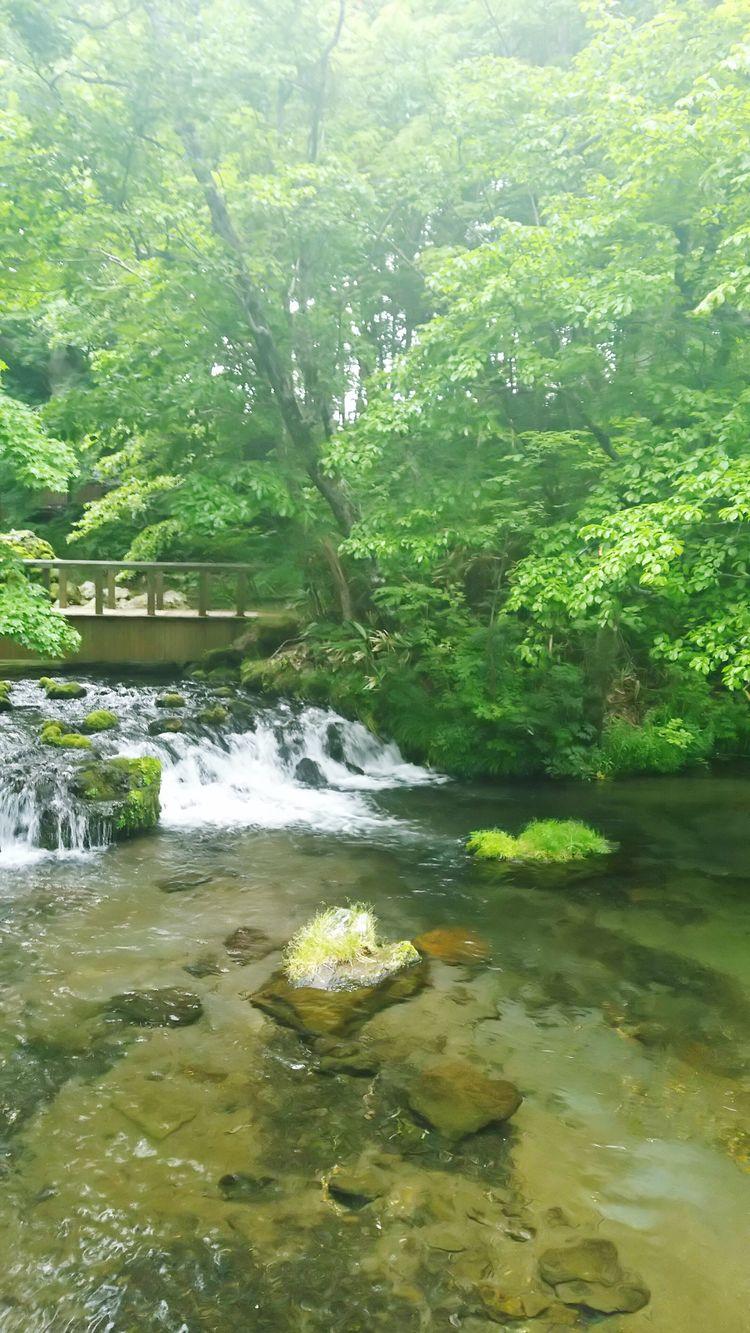 京極 名水 湧き水 Green Color Japan 苔 Hokkaido Grass Park Relaxing Outdoors Warter Spring Water Pond Delicious Water Enjoying Life EyeEm
