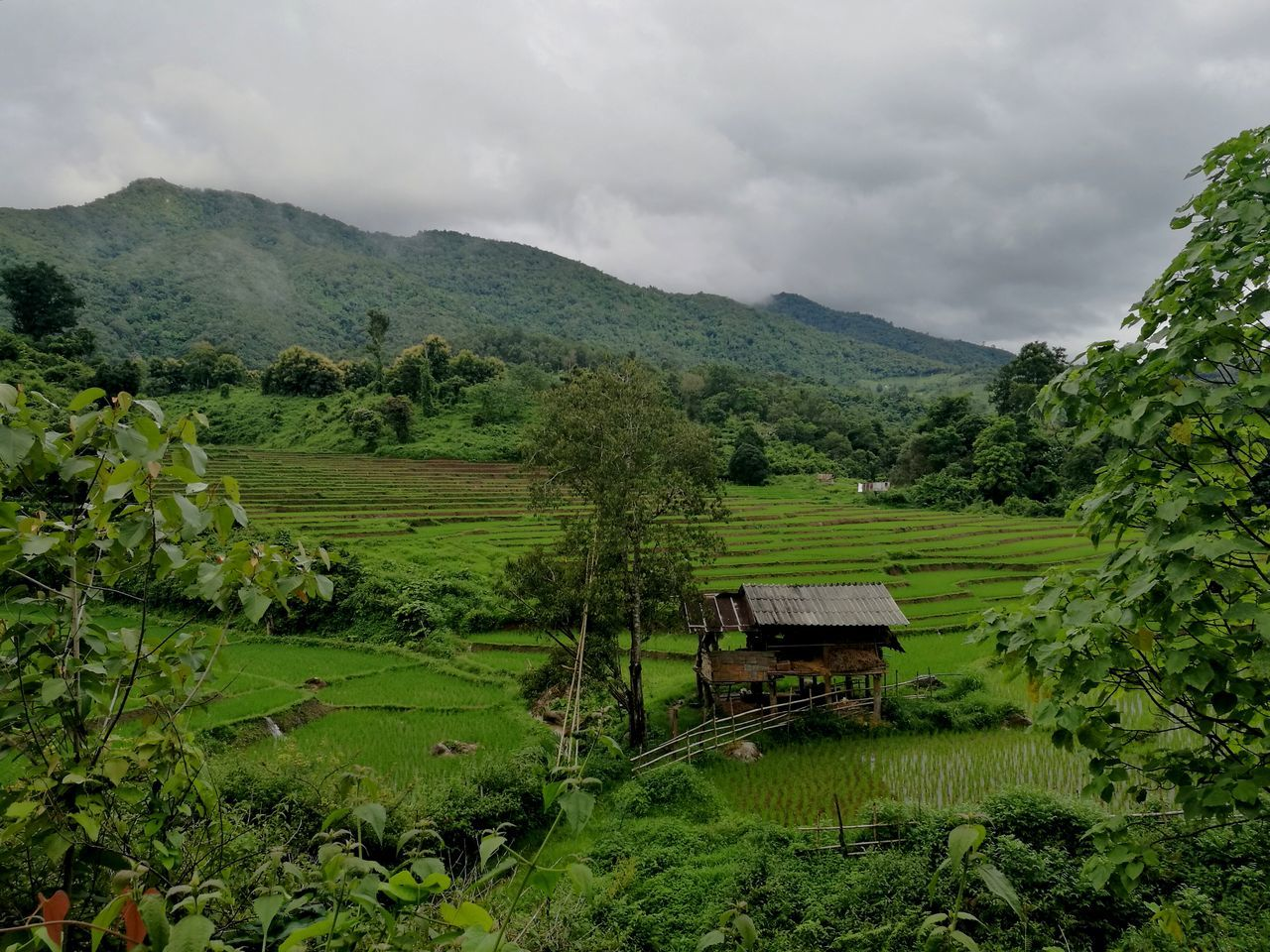 agriculture, landscape, field, scenics, nature, farm, beauty in nature, growth, tranquil scene, tranquility, mountain, rural scene, green color, no people, tree, day, sky, cloud - sky, outdoors, rice paddy, tea crop