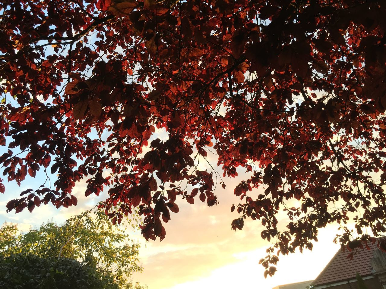Nature Shillouette Colour Of Life Outdoors Tree Leaves Dusk Papworth Everard