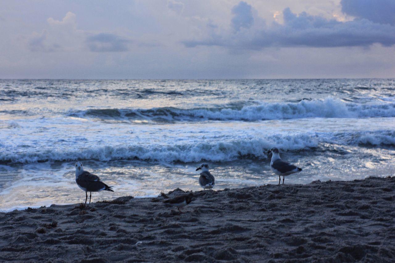 Grey morning at the beach Horizon Over Water Melbourne Beach, FL Seagull Surf Wave Beach Oceanscape Wildlife Shore Birds Seagulls Cloud - Sky Windy Day Seascape