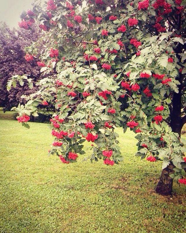 Lovely LoveNature Tree Lover Natur Is Beautiful Favourite Tree
