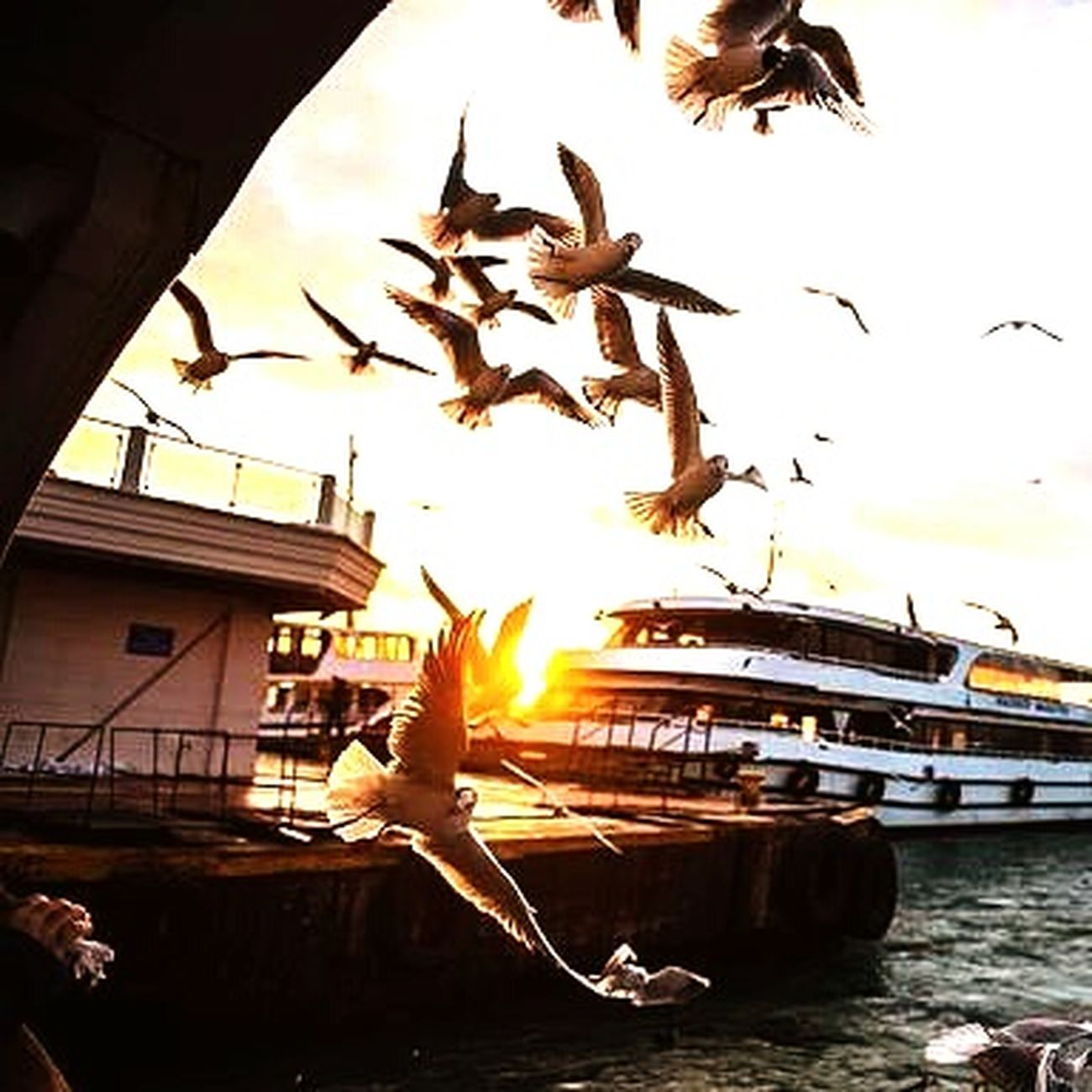 Istanbul Turkey Kadikoy Evening Sky Sea Birds🐦⛅ Steamboat Wharf Eye4photography  Eyemphotos#september