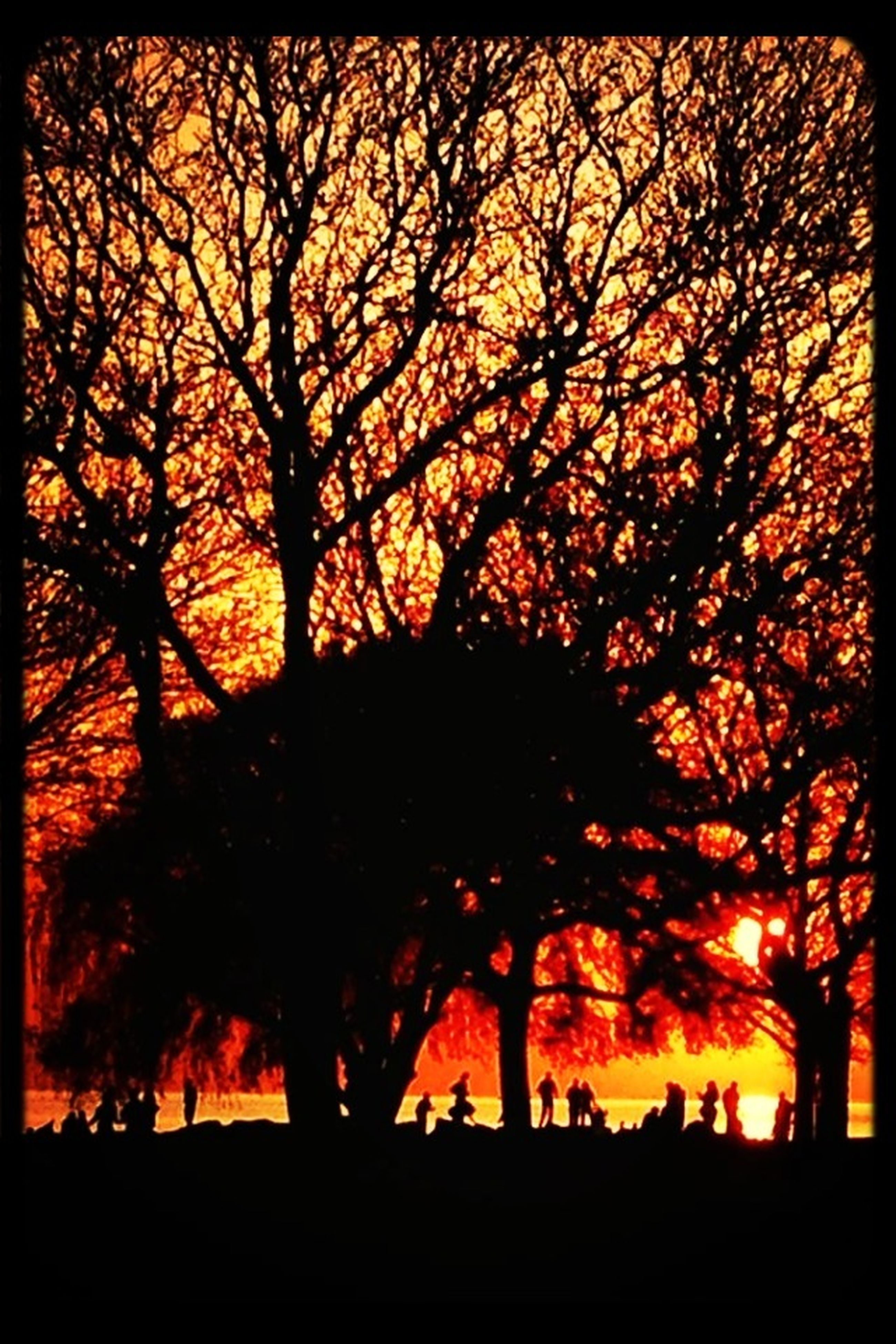 tree, transfer print, sunset, silhouette, auto post production filter, beauty in nature, tranquility, branch, scenics, tranquil scene, orange color, nature, bare tree, sky, growth, idyllic, landscape, outdoors, no people, field