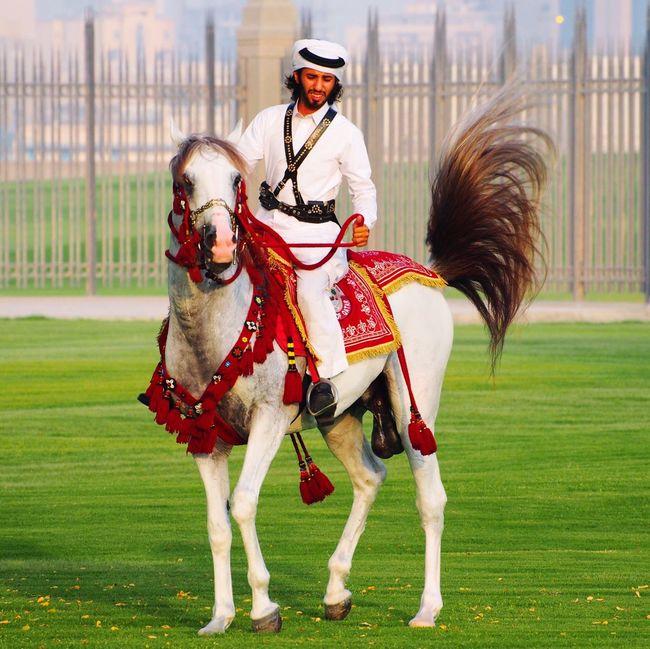 Doha Corniche Qatar Cavalry Arabian Horse Dohalife Doha Qatar Taking Photos Qatarlife Horses