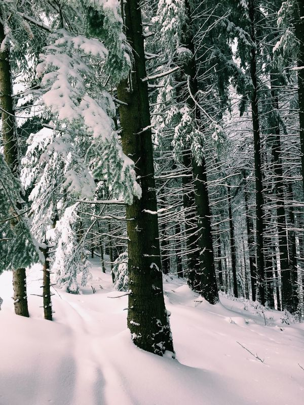 Snow Winter Cold Temperature Tree Nature Weather Beauty In Nature Forest Tranquility Covering Branch No People Tranquil Scene Tree Trunk Scenics Outdoors Day Landscape Cold Tree Trunk