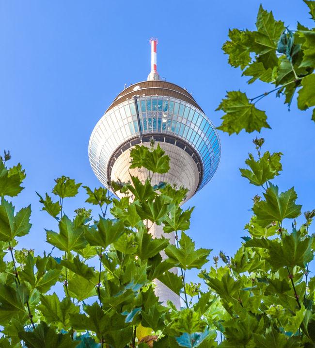 Iconic tv tower in Dusseldorf, Germany Bleu Sky Düsseldorf Düsseldorf ♡ Germany GERMANY🇩🇪DEUTSCHERLAND@ International Landmark Landmark Low Angle View North Rhine Westfalia North Rhine-westphalia Northrhinewestphalia Television Tower Tower TV Tower
