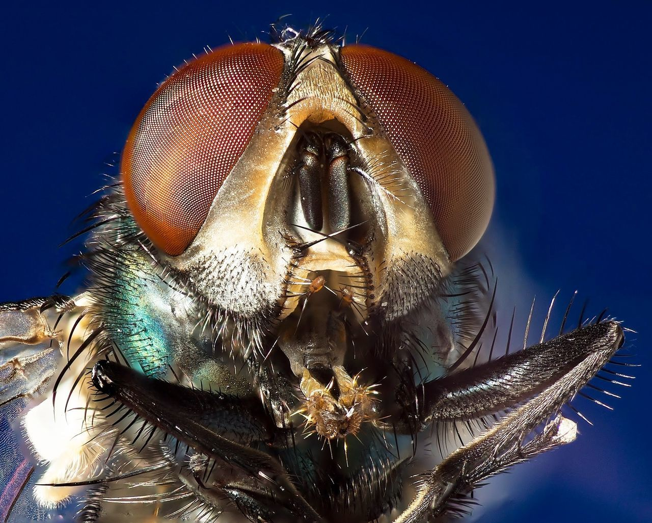 Macro Beauty of a fly.