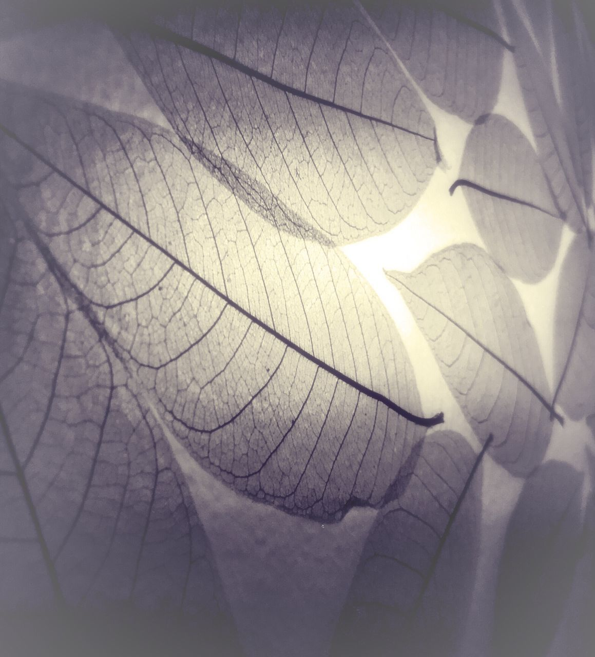 leaf, close-up, nature, day, sunlight, no people, outdoors, fragility, beauty in nature