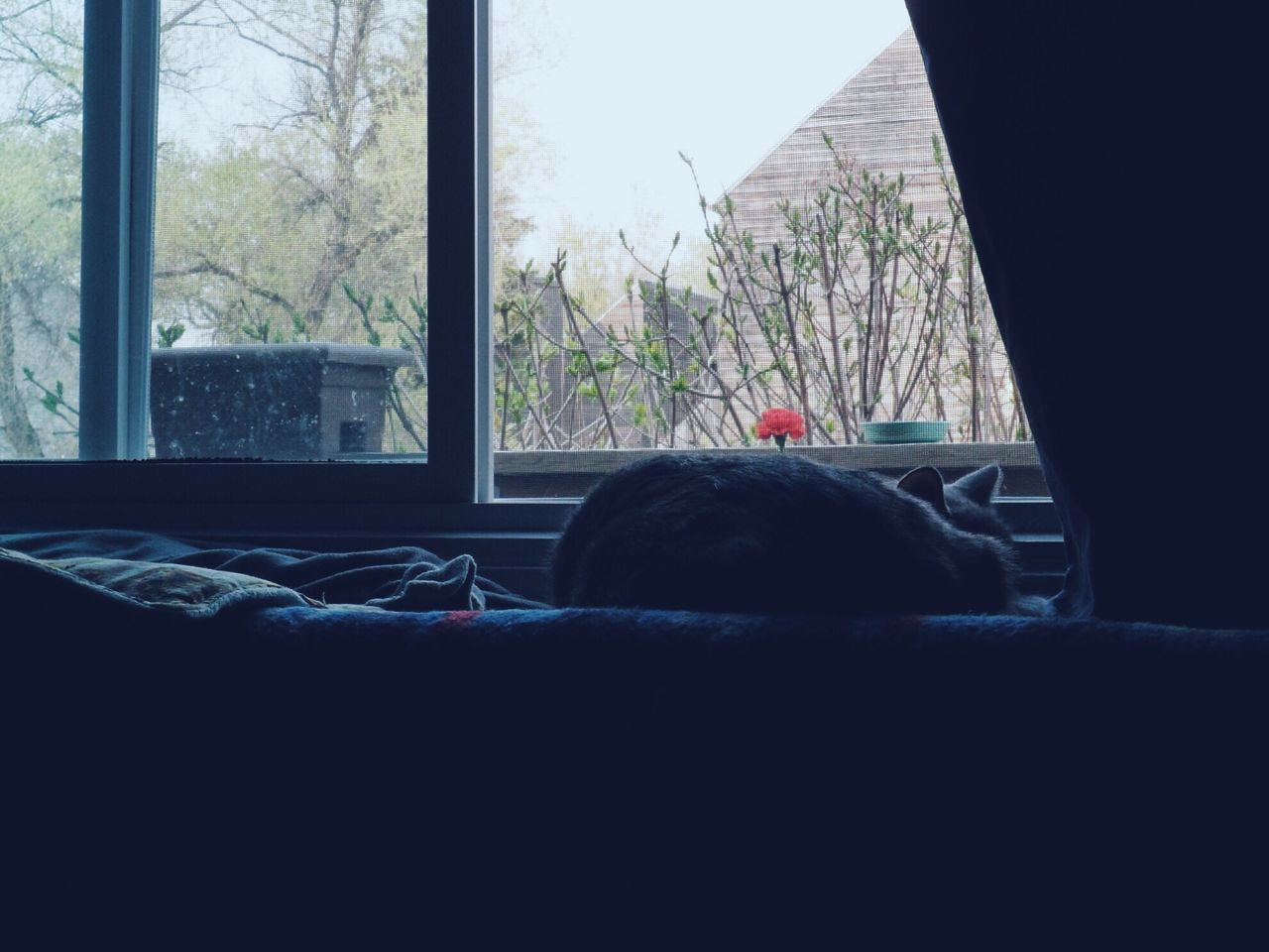 window, indoors, home interior, day, domestic room, no people, tree, close-up