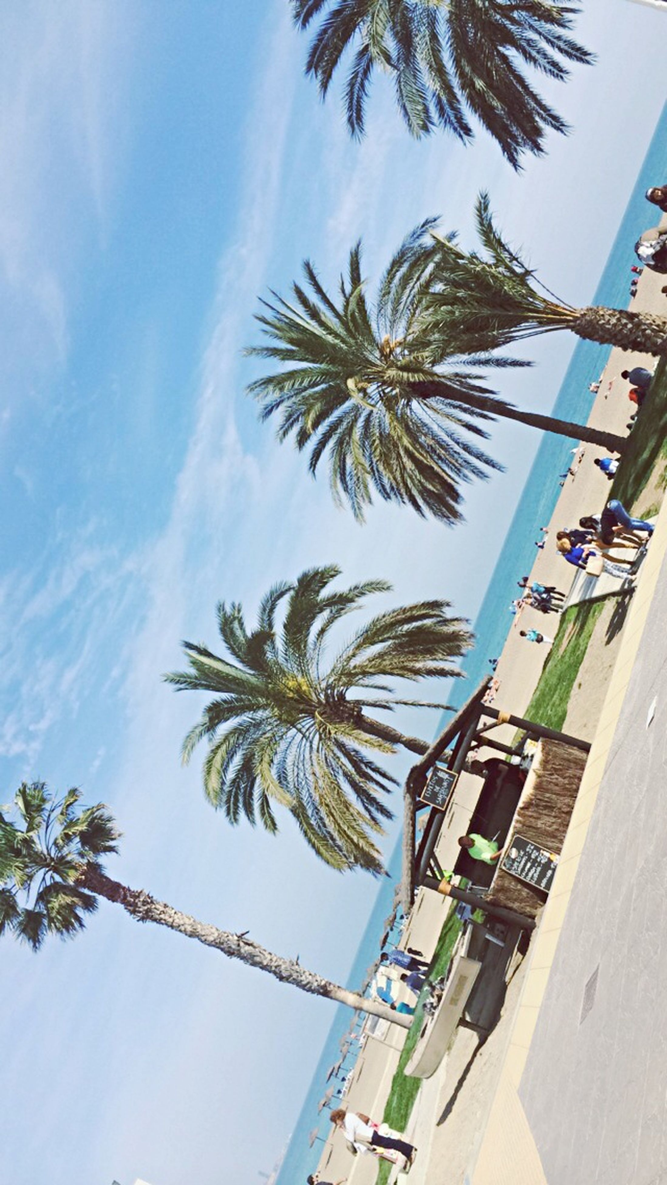 palm tree, sky, tree, low angle view, growth, blue, built structure, coconut palm tree, day, sunlight, cloud, cloud - sky, nature, beach, building exterior, architecture, outdoors, tree trunk, sea, incidental people