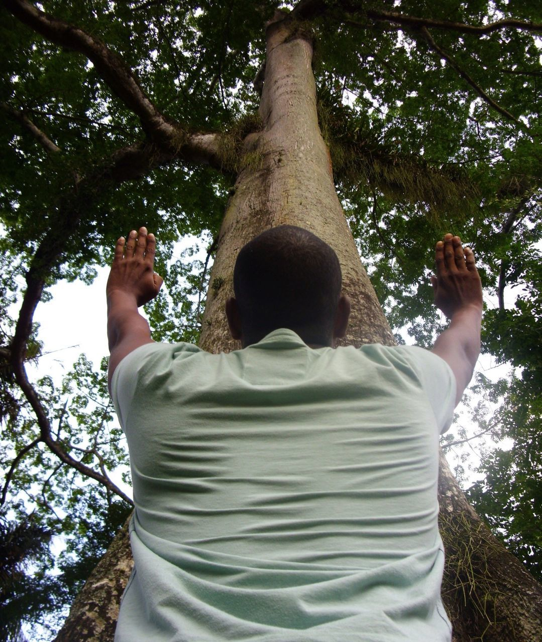 Low Angle View Of Man With Hands Raised Against Tree