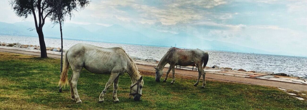 I Love Horses Eyemnaturelover Check This Out Seaside