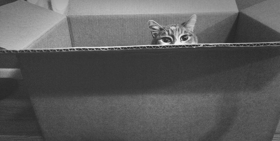 Beautiful stock photos of box, Animal, Auto Post Production Filter, Box, Cardboard Box