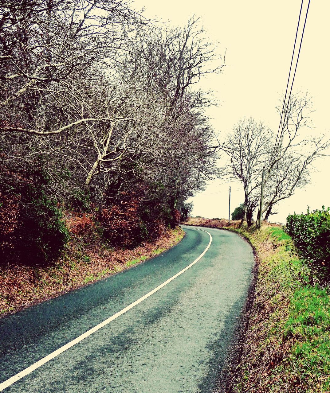 road, tree, the way forward, bare tree, diminishing perspective, transportation, nature, day, clear sky, outdoors, tranquility, branch, no people, landscape, curve, beauty in nature, sky