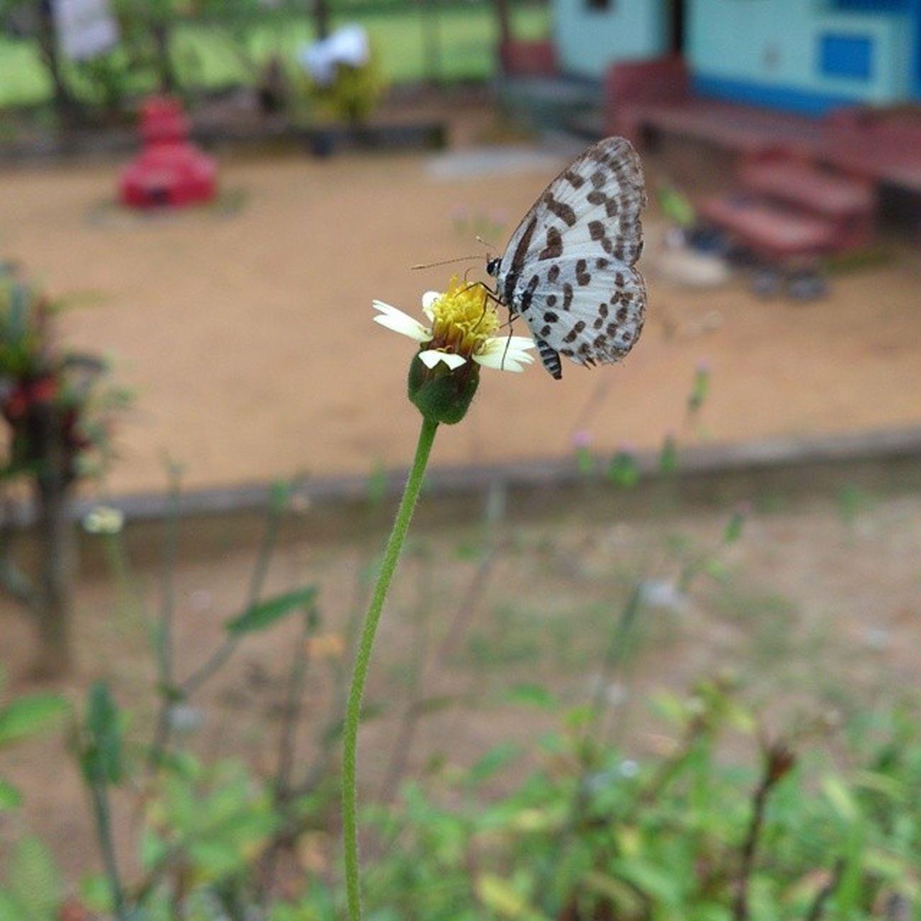 Its food time..Beautiful SpottedButterfly Flower Macro Sonycamuneditedinstapic