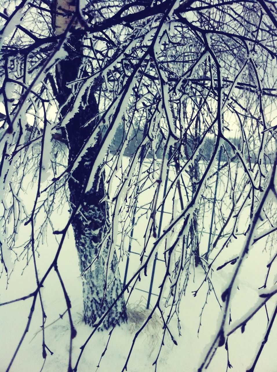 nature, winter, day, no people, cold temperature, outdoors, snow, beauty in nature, backgrounds, branch, bare tree, tree, close-up