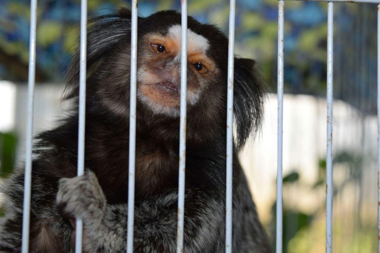 Cage One Animal Animal Themes Animals In Captivity Metal Monkey Zoo Mammal Primate Close-up No People Trapped Day Outdoors Animal Wildlife Ape Security Bar Orangutan Nature Chimpanzee