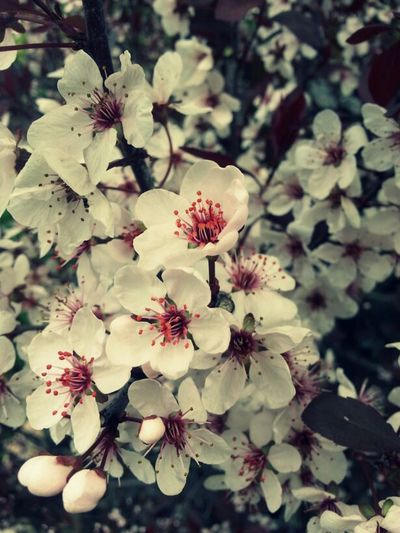 Some of my photography c: Flowers Photography Beautiful Simple