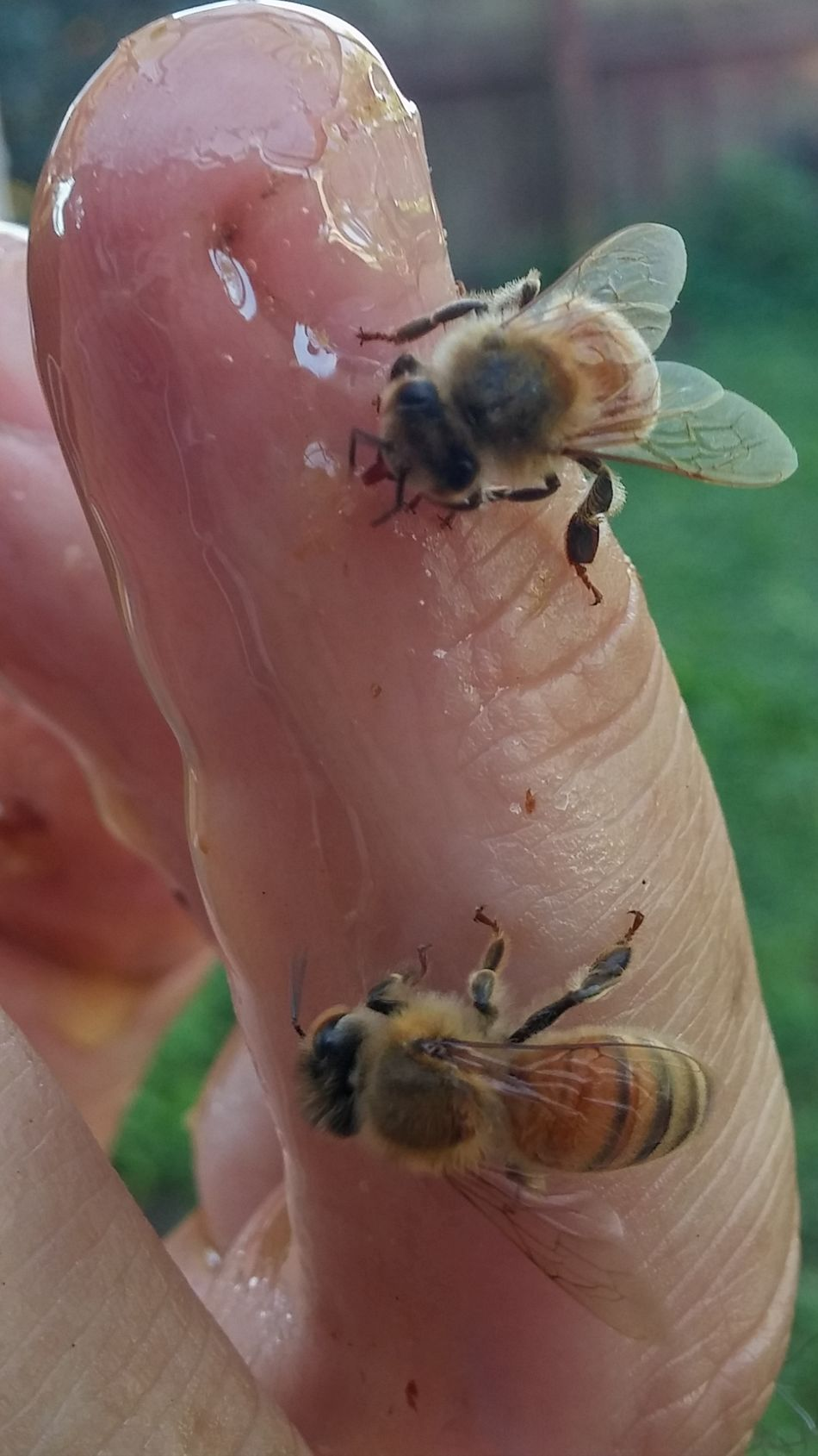 On his finger 4 Insect Insect Theme Close-up Feeding  Nature Day Food Outdoors Perching Yves Bees🐝 Hallo Hanging Women Who Inspire You I See You Summer NZ Style