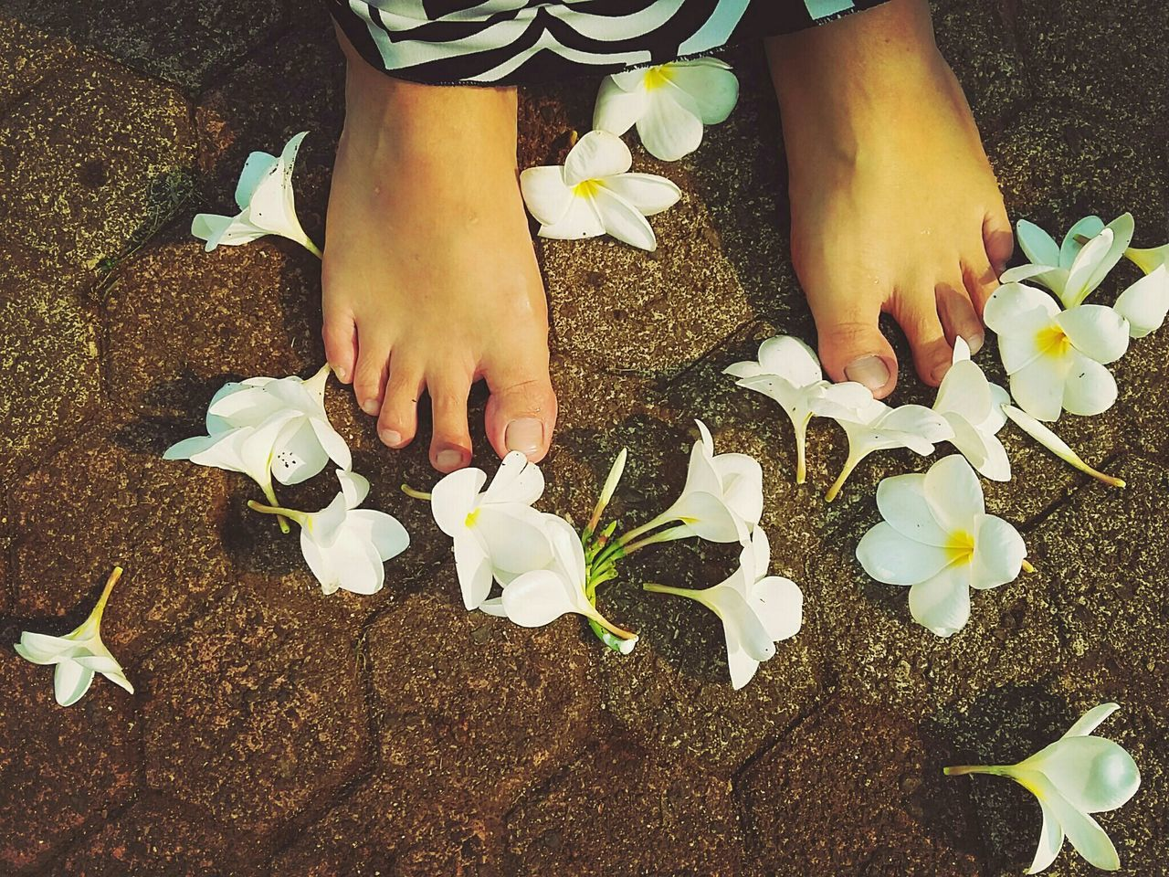Samsungphotography Frangipani Eye4photography  Deceptively Simple Learn & Shoot: Single Light Source My Feets