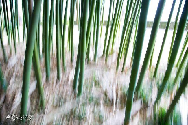 brain bamboo