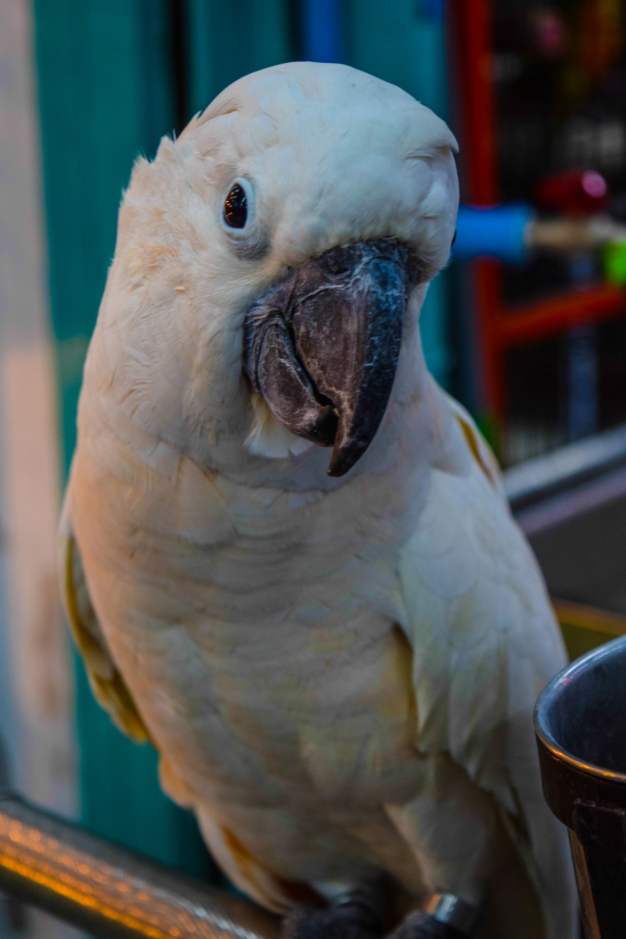 Bird นก Animal Themes Animal Wildlife Animals In The Wild Bird Close-up Cockatoo Day Nature No People One Animal Outdoors Parrot Perching นก