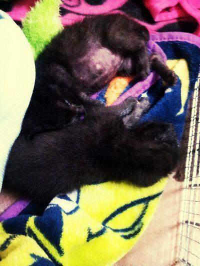 Gaga n bebe Kittens Cat♡ Cat Lovers Cat