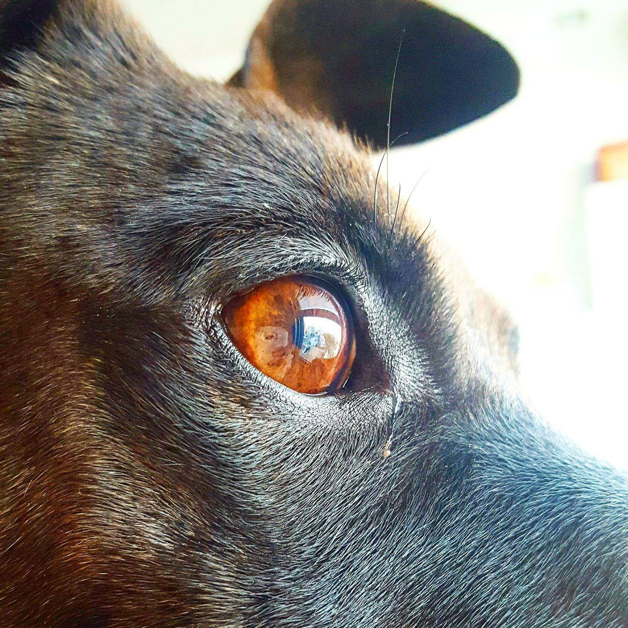 one animal, domestic animals, pets, animal themes, mammal, portrait, close-up, animal head, indoors, no people, dog, looking at camera, day