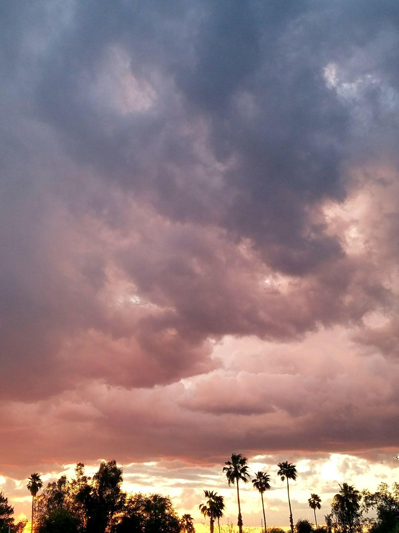 Dramatic Sky Storm Cloud Cloud - Sky Sunset Sky Cloudscape Thunderstorm Silhouette Beauty In Nature Palm Tree Premium Collection EyeEm Vision EyeEm Masterclass EyeEm Best Shots BestEyeemShots EyeEmBestEdits BestofEyeEm