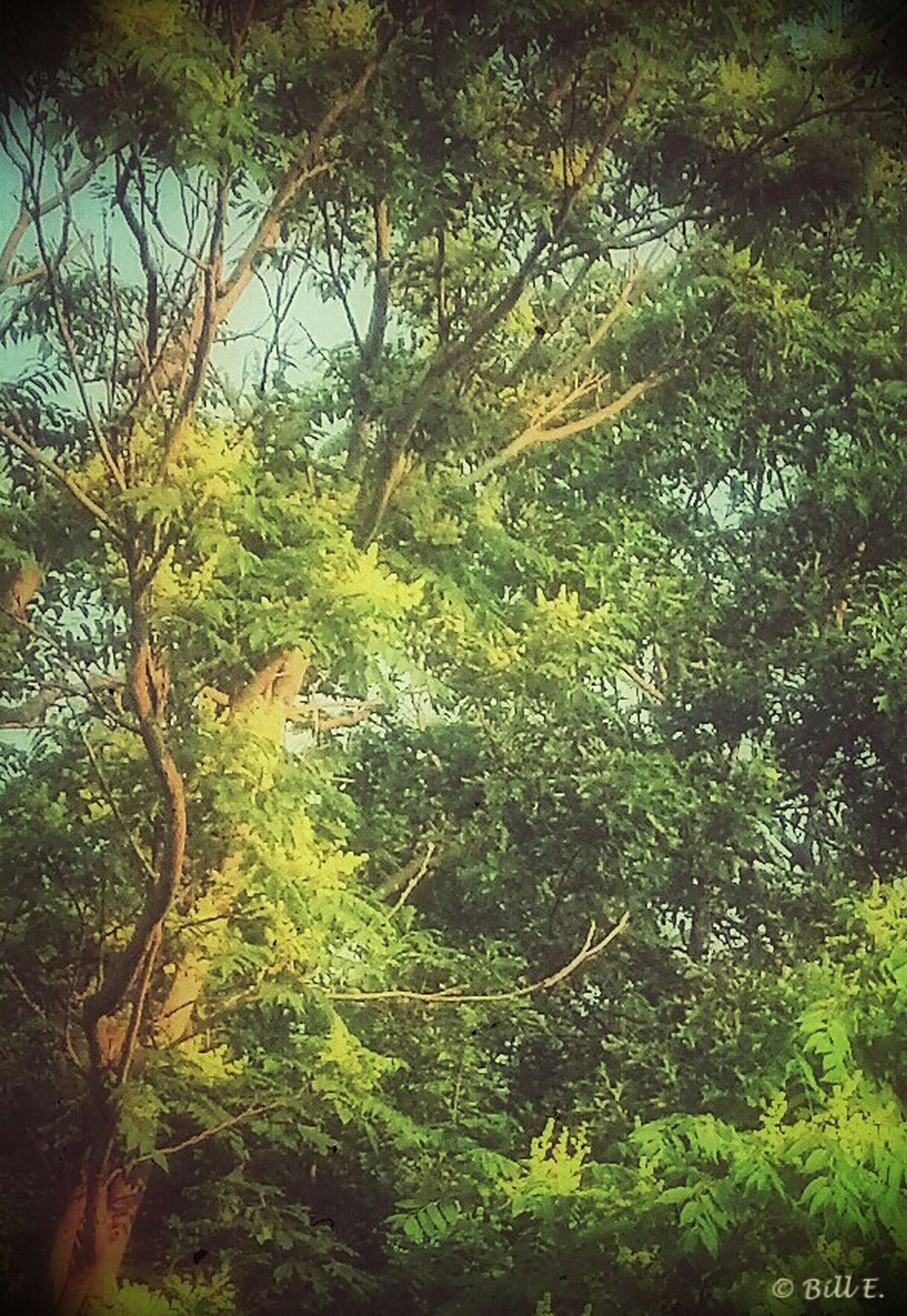 tree, tranquility, growth, tranquil scene, green color, branch, nature, beauty in nature, scenics, forest, lush foliage, tree trunk, idyllic, non-urban scene, day, water, outdoors, plant, landscape, green