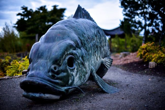 Big Fish Outdoors Onthepath As Sculpture In The Chinese Garden