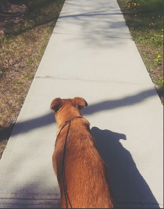 || Adventures with this creature || Hanging Out Dog Adventure Buddies