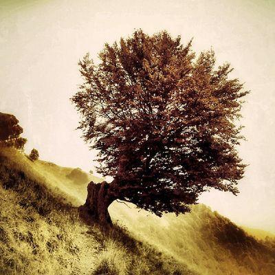 Instavarese Varese Ig_varese Ig_milan albero