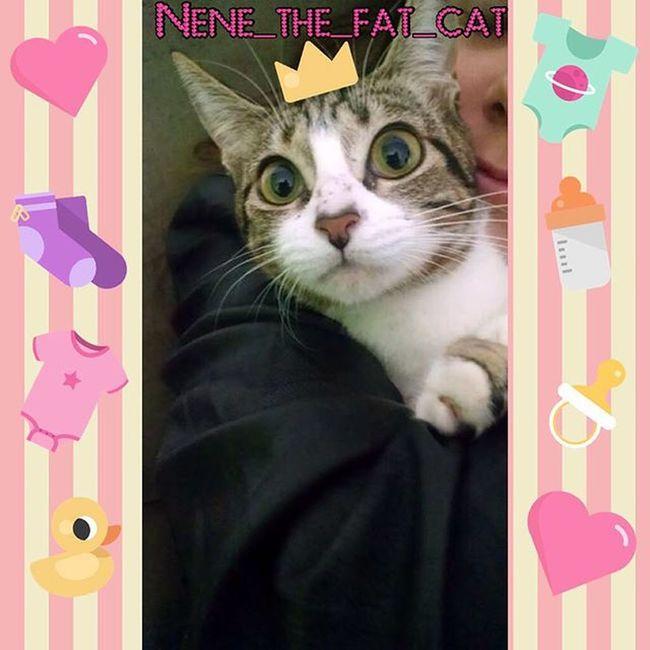 Boa Noite Amiguinhos💕 Amanhã é dia de tomar banho🙀 Odeio banhooo 😿Nenêmyfatcat Nenêthefatcat Boanoite Banhonão Cat Lovecats Soubebezinha