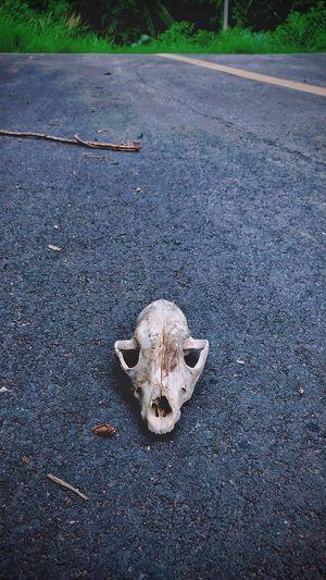 Death Animal Bone Animal Skull Nature Outdoors Animal Body Part Road