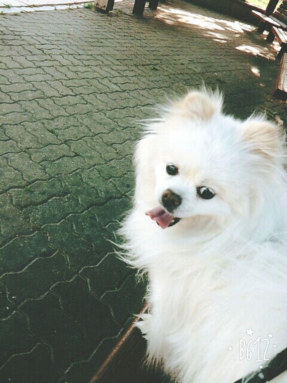쁘띠 Petti♥