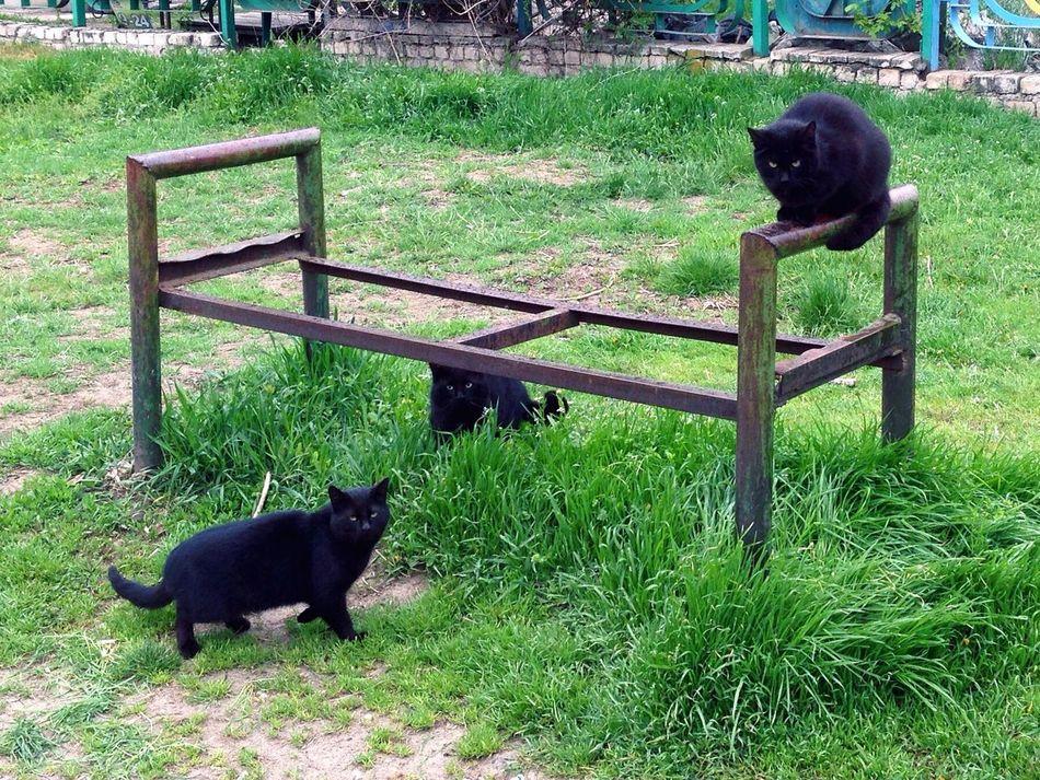 Cats Cats 🐱 Cat♡ Cat Lovers Cat Homeless Cats Cats Of EyeEm Коты котэ Котик кот
