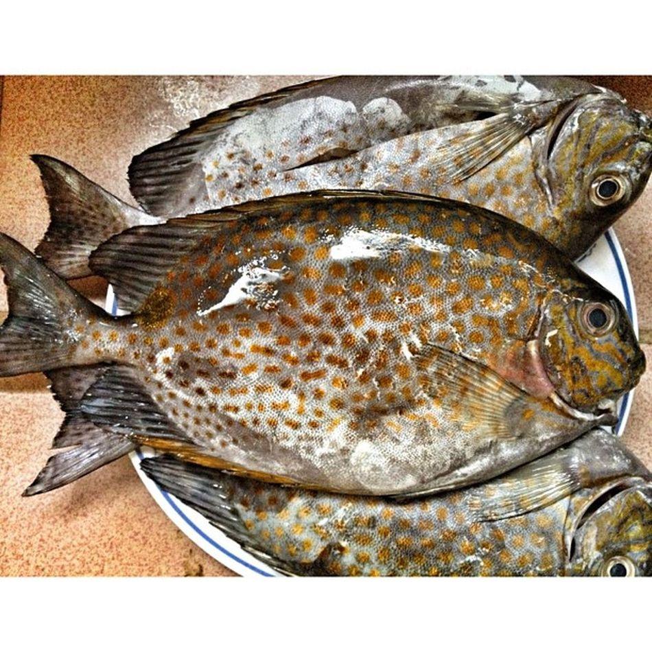 DangGit. Lunch Fish Rabbitfish Instagramthatshit