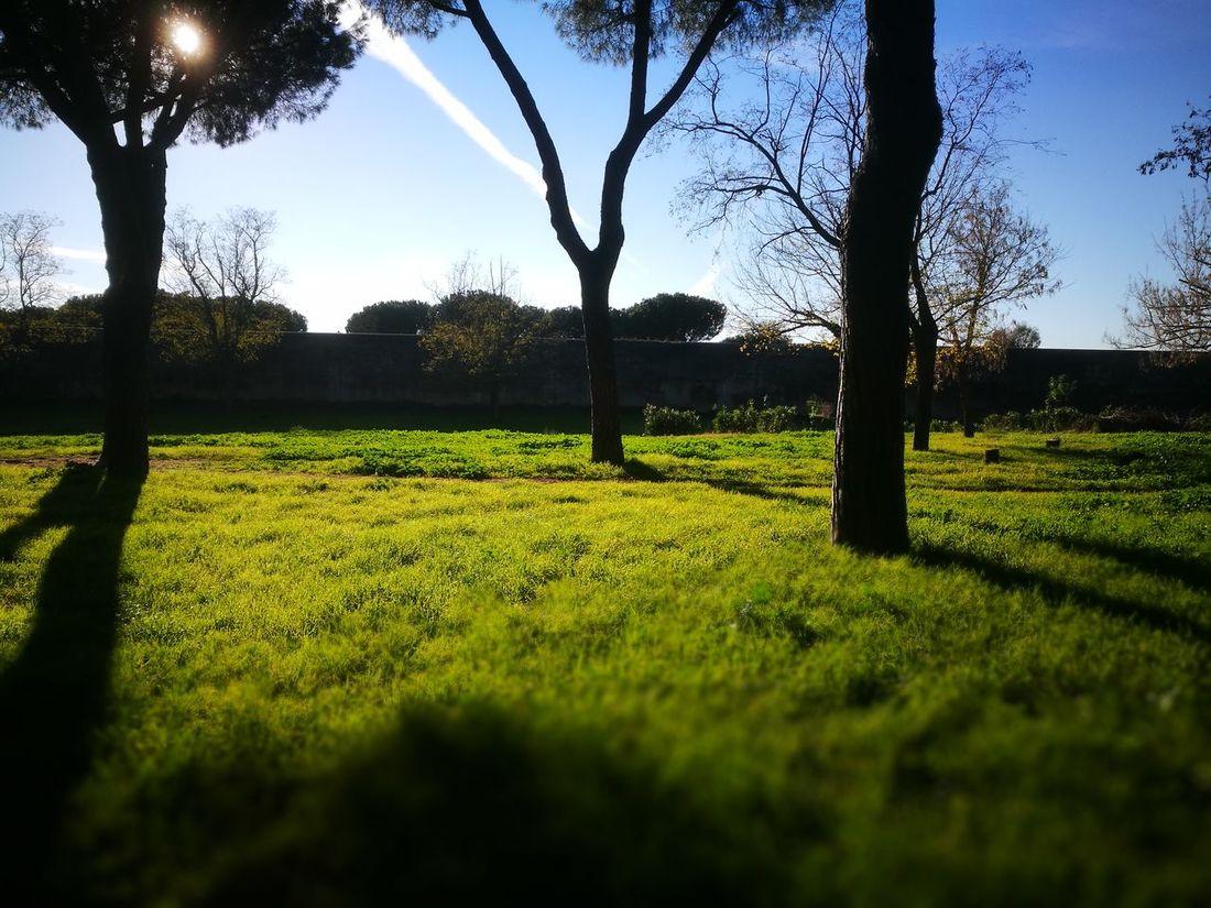 Grass Rome Italy🇮🇹 Rome Parco Degli Acquedotti Travel Destinations