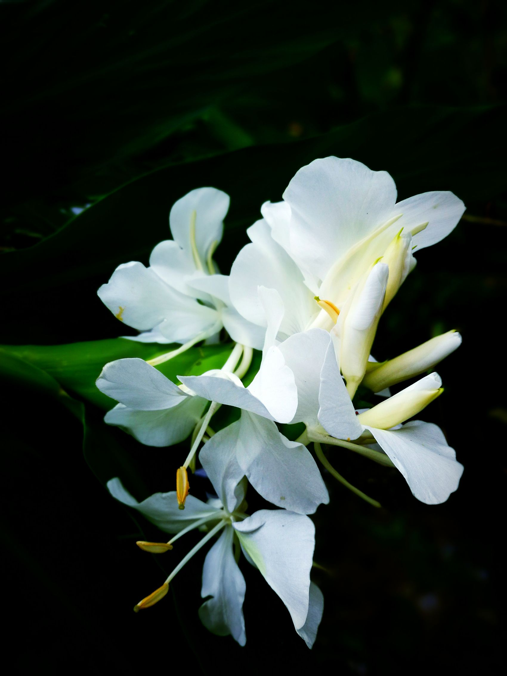 Taking Photos Hanging Out Check This Out Hello World Relaxing Enjoying Life Nature White Flower Paiwan