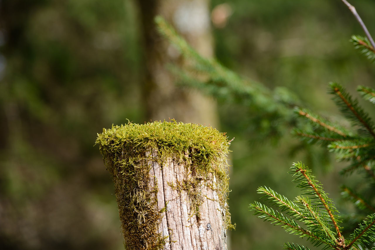 Moss Beauty In Nature Close-up Focus On Foreground Fresh Freshness Green Color Growth Moss Mossy Tree Nature No People Outdoors Plant Tree