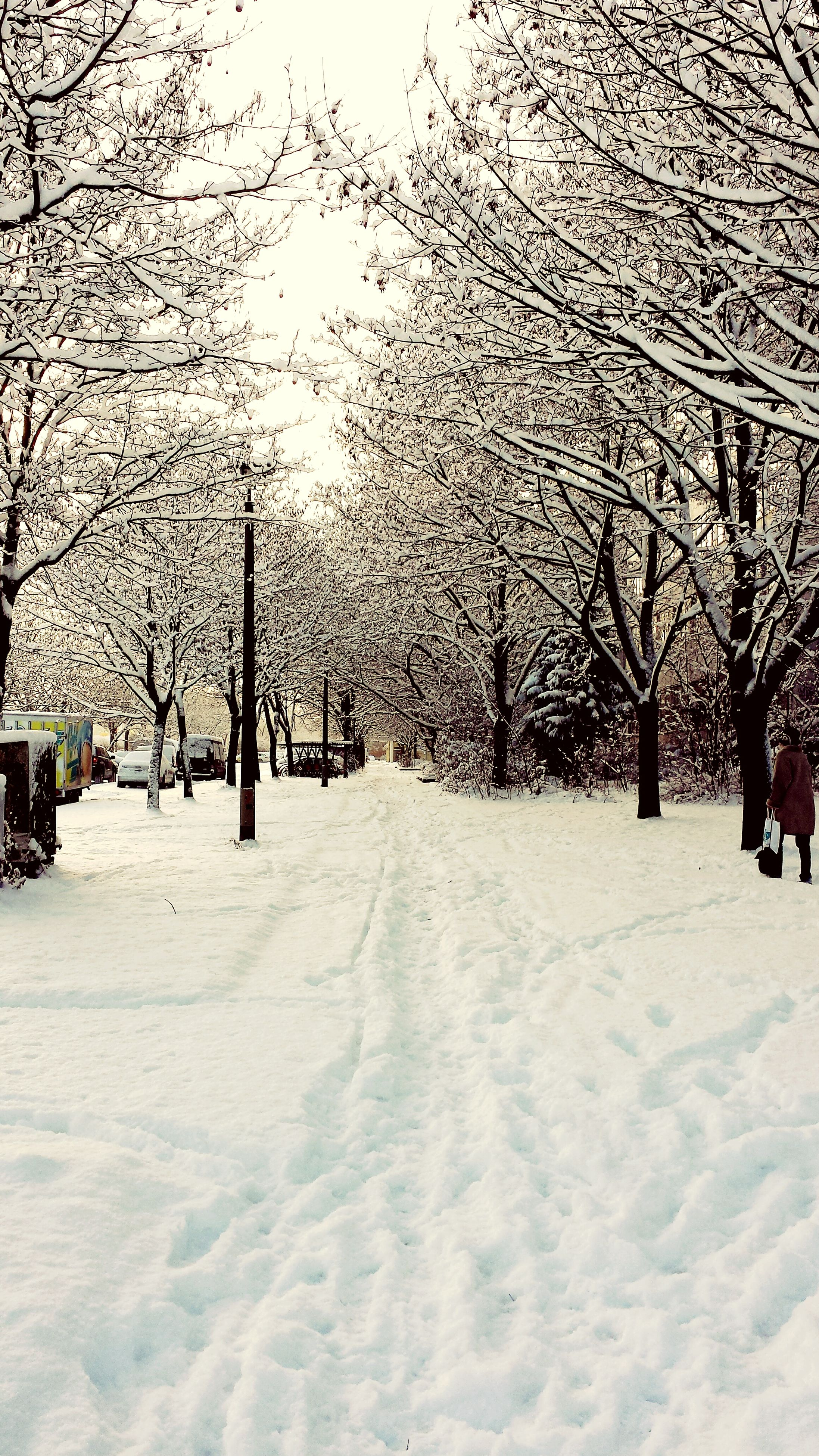 snow, winter, cold temperature, tree, season, weather, bare tree, the way forward, covering, tranquility, tranquil scene, nature, landscape, field, beauty in nature, covered, scenics, diminishing perspective, white color, empty