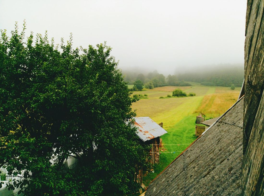 Tree Nature Landscape Beauty In Nature Fog Green Color Agriculture Plant Outdoors Summer Enjoying Nature Starting A Trip Landscape_photography Hello World Traveling Beauty In Nature Mountain EyeEm Best Shots Bieszczadymountains Bieszczady Villagelife